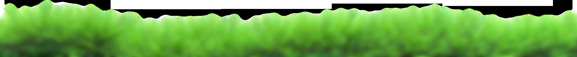 grass - Inicio